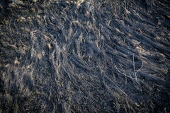 Burnt withered grass on field Royalty Free Stock Photo