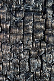 Burnt Wood. A close-up of burnt and charcoaled wood stock images