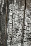 Burnt wood bark Stock Image