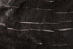 Burnt wood black background. Surface of charcoal. Charred tree texture Royalty Free Stock Photography