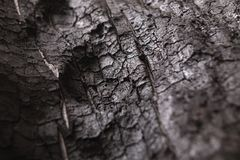Burnt wood black background. Surface of charcoal. Charred tree texture Stock Photos