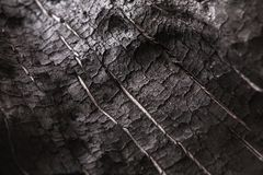 Burnt wood black background. Surface of charcoal. Charred tree texture Stock Image