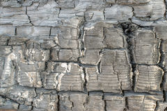 Burnt Wood or Charcoal Texture with Cracks Stock Images