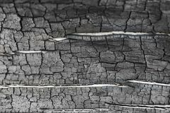 Burnt wood grey background. Surface of charcoal. Charred tree texture Stock Photography