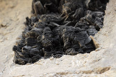 Burnt wood in Herculaneum Royalty Free Stock Images