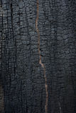 Burnt wood texture. Detail of burnt wood texture Stock Photo