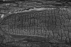 Burnt wood texture Stock Image