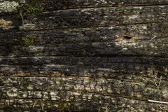 The burnt wood. The texture of the burnt wood Royalty Free Stock Photos