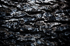 Burnt wood texture. Background close up Royalty Free Stock Photo
