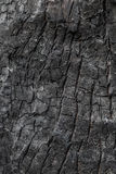 Burnt wood texture Stock Images