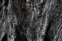 Burnt wood from wildfire Stock Photo