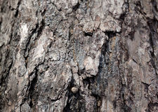 Burnt wooden texture or background Stock Photos