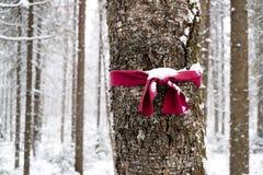 Burocracia em uma floresta densa para a orientação de modo a para não obter perdido, o ponteiro na floresta na convicção dos turi fotografia de stock