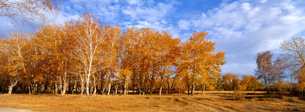 Burqin woods. Burqin woods, Nature, Beauty Stock Images