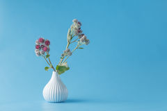 Burr garbage plant in vase Stock Images