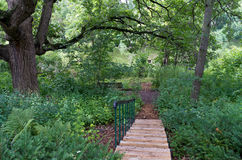 Burr Oak Backyard and Stairs. Backyard landscape with stairs leading to pond and mature burr oak tree or quercus macrocarpa shading entire yard in summer Royalty Free Stock Photos