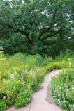 Burr Oak e passagem do jardim Fotos de Stock Royalty Free