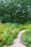 Burr Oak and Garden Walkway Royalty Free Stock Photos