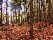Burr Pond delstatspark som fotvandrar slingan Arkivbilder