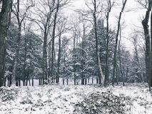 Burr pond state park woods winter view Royalty Free Stock Photos