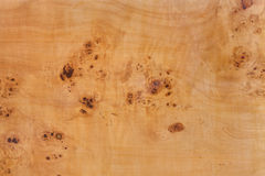 Burr poplar Stock Photo