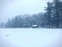 Burr stanu parka drewien zimy stawowy widok Obraz Royalty Free