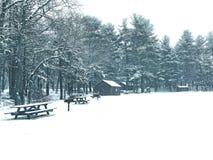 Burr stanu parka drewien zimy stawowy widok Obrazy Royalty Free