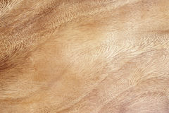 Burr wood texture background Royalty Free Stock Images