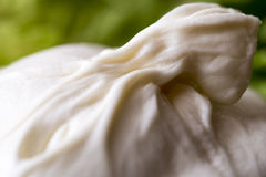 Burrata. Macro burrata traditional italian cheese on salad background royalty free stock photos