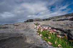 Burren风景  库存照片