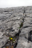 Burren Stock Foto's