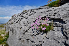The Burren Stock Images