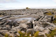The Burren in autumn Royalty Free Stock Photos