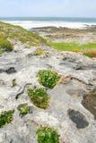 Burren, Ierland Royalty-vrije Stock Fotografie