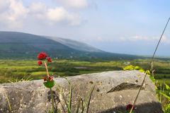 Burren, Ireland Stock Photography