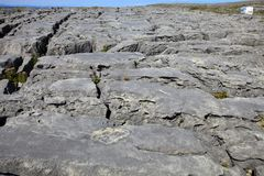 The burren rocks. Burren Ireland, - July 20, 2016: The Burren rocks, Co Clare, Ireland, Karst-Landscape Region Stock Photography