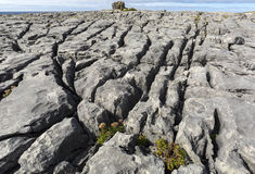 The Burren is a karst-landscape region in northwest County Clare, in Ireland. Stock Image