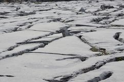 In the Burren national park with cool rocks. Awesome rocks in the Burren national park with large cracks Stock Images