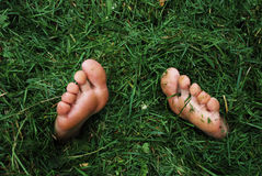 Buried in the grass royalty free stock image