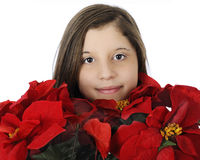 Burried in Poinsettias Stock Images
