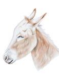 Burro ilustración del vector