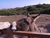 burro Foto de archivo libre de regalías