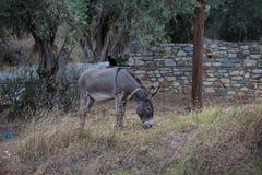 burro Imagen de archivo