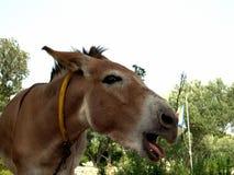 burro royaltyfri bild