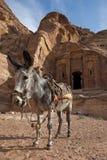 Burro cerca de la tumba antigua en el Petra Fotos de archivo libres de regalías