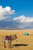 Burro cerca del lago Canción-Kul Imagen de archivo