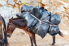 Burro con el bolso de basura Imagen de archivo