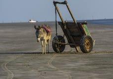 Burro con el carro del trabajador en la playa Fotos de archivo libres de regalías