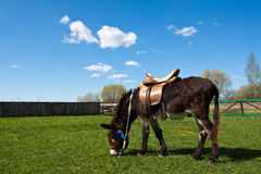 Burro in countryside. Royalty Free Stock Images