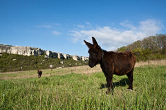 Burro in countryside. Stock Image